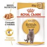 Royal Canin British Shorthair húmido para gatos