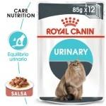 Royal Canin Urinary Care em molho para gatos