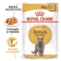 royal canin british shorthair h mido para gatos tiendanimal. Black Bedroom Furniture Sets. Home Design Ideas