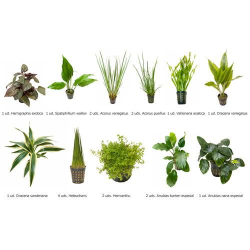 .Plantas Naturais para Aquários Conjunto 15