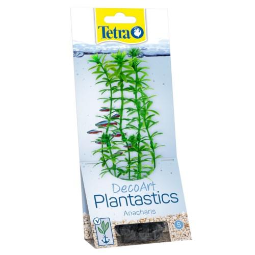 Plantas decorativas para aquários Anachari
