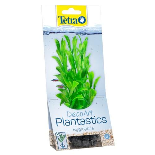 Plantas decorativas para aquários Hygrophi
