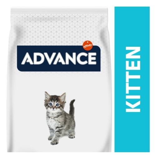 Advance Kitten