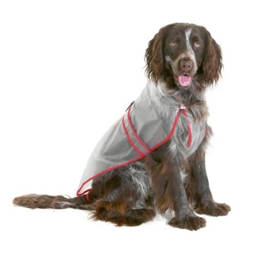 Impermeável transparente para cães
