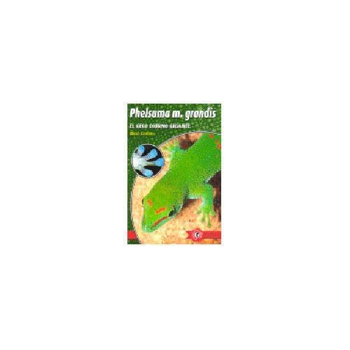 Phelsuma madagascariensis Grandis Geco Diurno Gigante [Espanhol