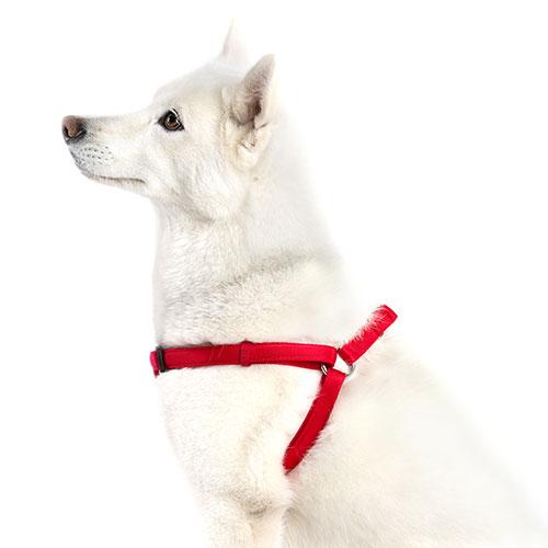 Technical Pet Arnês acolchoado para cães Soft Vermelho