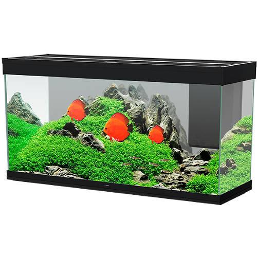 Aquário de vidro Ciano Emotions preto