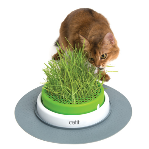 Centro de erva gateira Catit Senses 2.0 Grass Planter