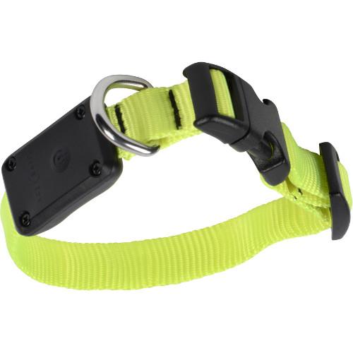 Coleira LED para perros NiteDawg amarela