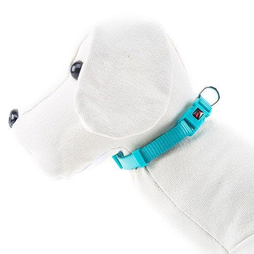Coleira para cães de Nylon linha Basic Cor Agua-marinha