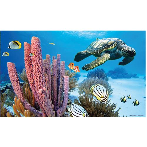 Imagem de fundo em 3D para aquários Póster Marino