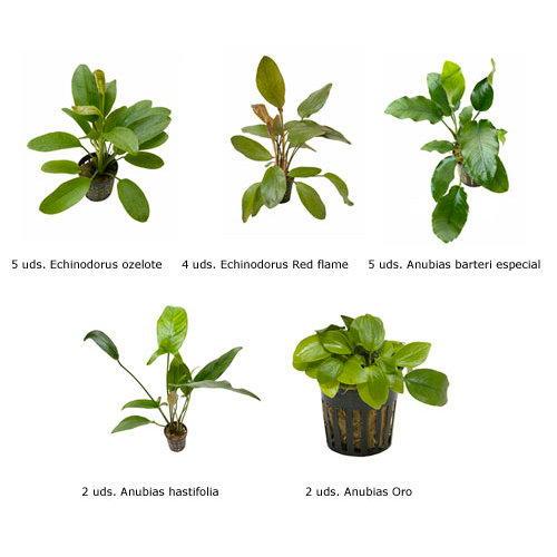 Plantas naturais para aqu rios conjunto 23 tiendanimal for 5 nombres de plantas ornamentales
