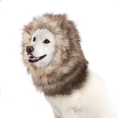 Peruca castanha leon para cães 40 cm