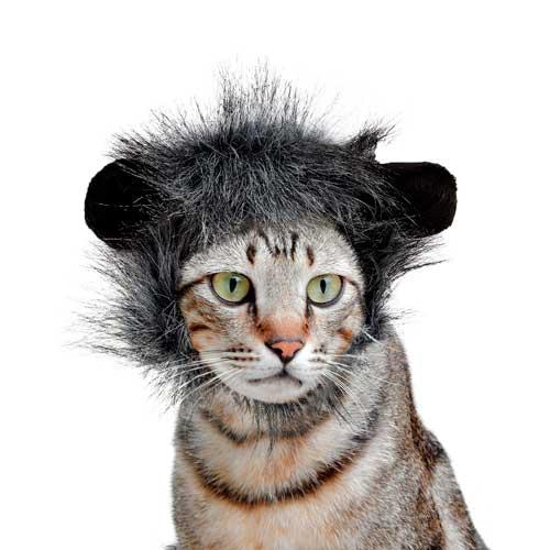 Peruca cinza e preto para gatos 16 cm