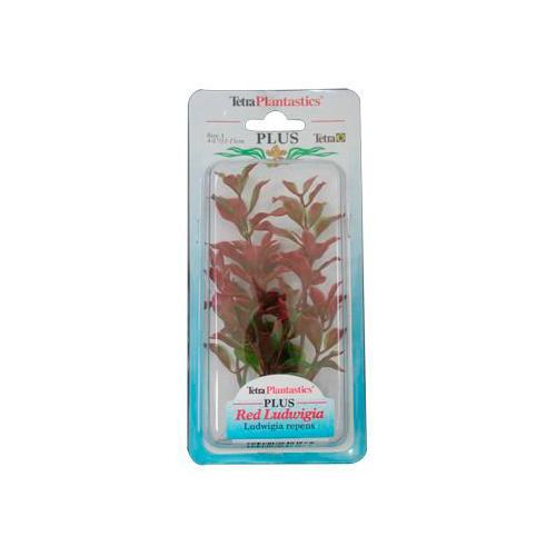 Red Ludwigia Plus Plantas Decorativas