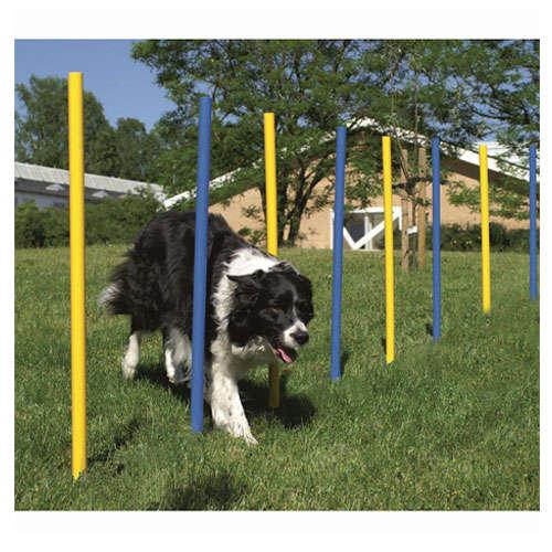 Slalom barras em ziguezague para cães