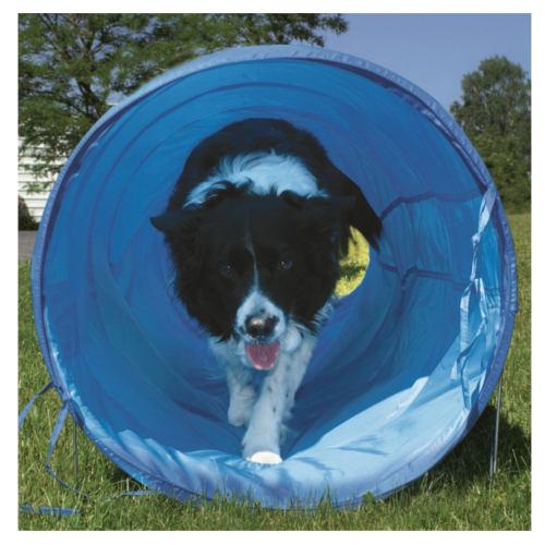 Túnel flexível de agility para cães