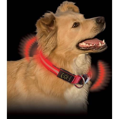 Coleira LED para cães NiteDawg vermelha