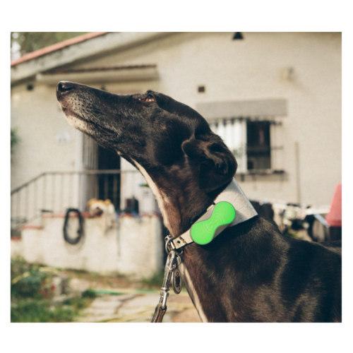 GPS para cães Dondo localizador desde telemóvel