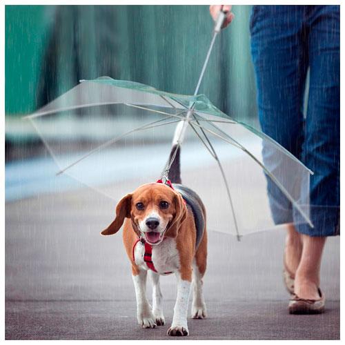 Guarda-chuva com trela para cães