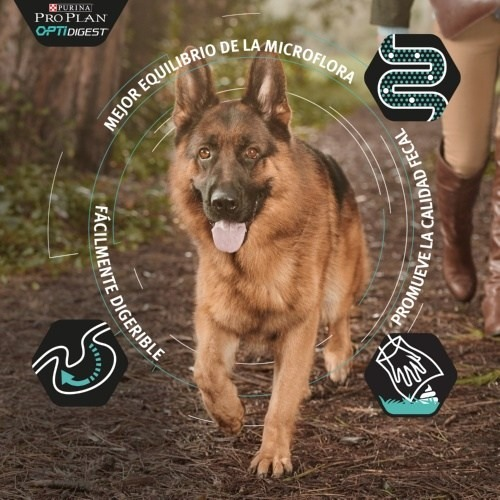 Purina Pro Plan OptiDigest de cordeiro para cães grandes e robustos