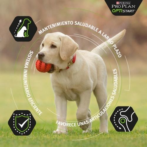 Purina Pro Plan OptiDigest de cordeiro para cachorros