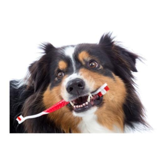Escova de dentes para cães e gatos