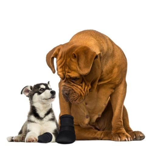 Bota protetora para cães