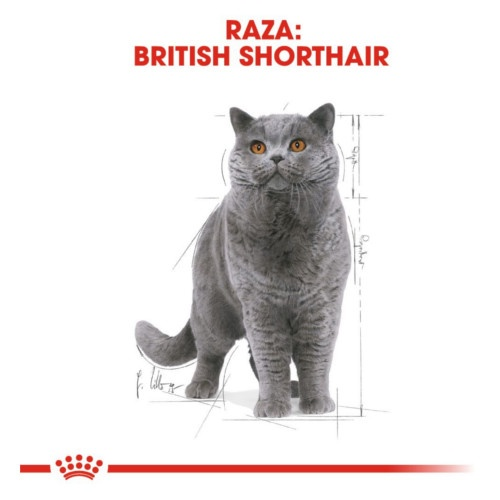 Royal Canin British Shorthair húmido para gatos