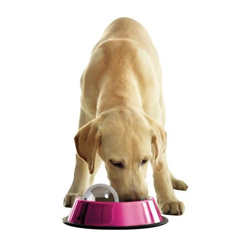 Bola Dog Hog para comer mais devagar