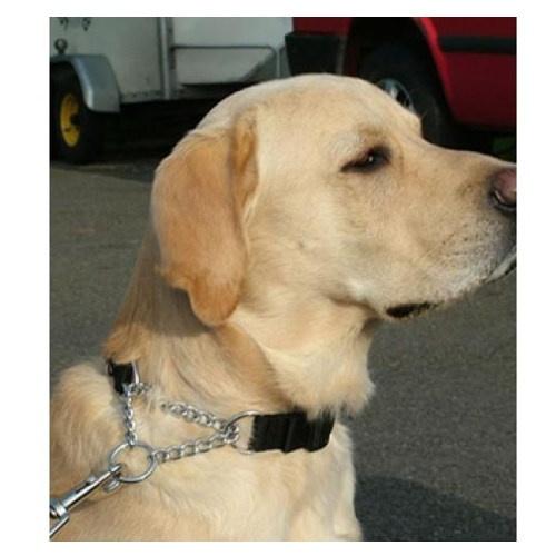 Coleira anti puxões Kumfi Kombi para cães