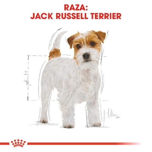 Ração Royal Canin Jack Russell Terrier Adult