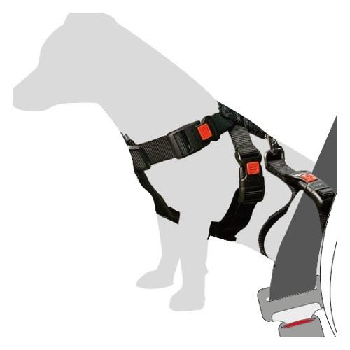 Arnês de segurança para levar o seu cão no carro