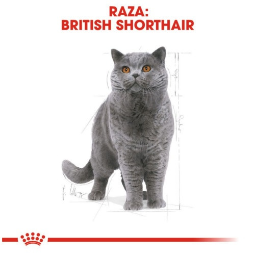 Royal Canin British Shorthair 34
