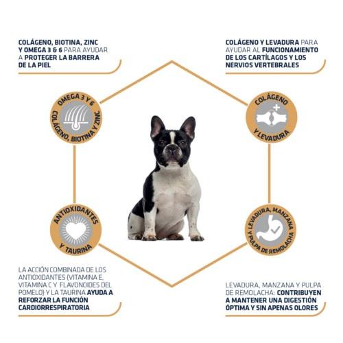 Advance Bulldog Francês